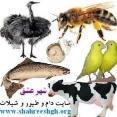 شهرعشق سایت تخصصی شیلات و دام و طیور و حیوانات خانگی